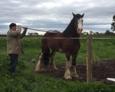 Cavalo Sabe Como é Agradável Ter Alguém Para Lhe Coçar As Costas 6