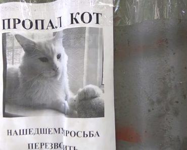 A Ilusão De Ótica Com a Fotografia De Um Gato Desaparecido Que Está a Fascinar a Internet 5