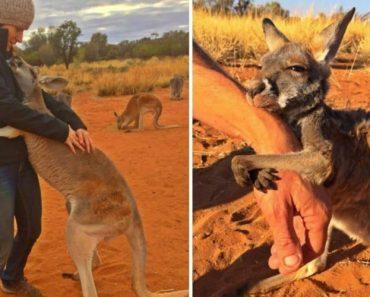 Em Forma De Gratidão, Canguru Abraça e Faz Carinhos Aos Tratadores Todos Os Dias 3