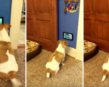 Cão Fica Encantado Ao Ver Que Tem Uma Tv Só Para Ele 9