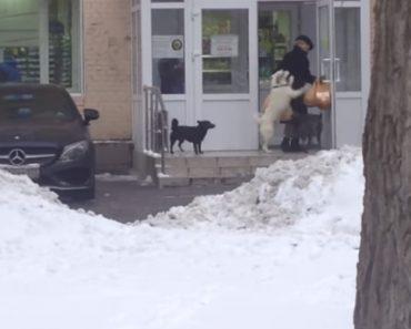 """Mulher é """"Assaltada"""" Por Um Grupo Cães à Porta De Uma Mercearia 1"""
