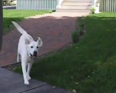 Todos Os Dias Este Cão Dá Uma Pequena Ajuda Ao Carteiro 6