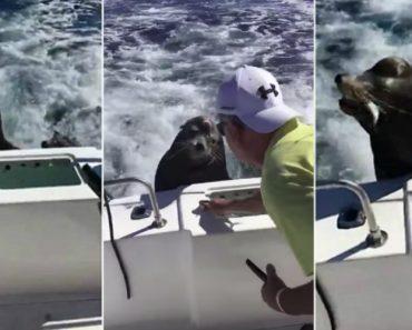 Guloso Leão-Marinho Sobe Para Cima De Barco Em Andamento e Exige Alimento 9