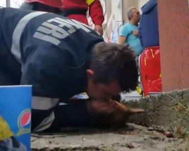 Bombeiro Salva Cão Ao Fazer Respiração Boca-a-Boca Após Incêndio 4