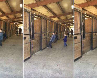 """Menino Trava Intensa Batalha Para Convencer o Seu Robusto """"Cavalo"""" a Sair Da Box 23"""
