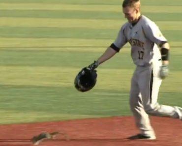 Jogador Usa Capacete Para Capturar Energético Esquilo Que Invadiu Campo De Baseball 6