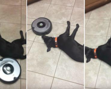 Nada Perturba a Preguiça Deste Cão, Nem Mesmo o Aspirador Automático 6