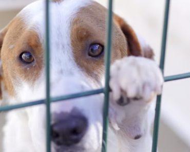 Um Vídeo Poderoso Dedicado a Todas As Pessoas Que Abandonam Animais 6