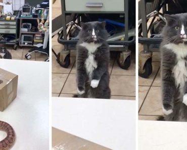 Gato Fica Petrificado Ao Ver Uma Cobra Pela Primeira Vez 5