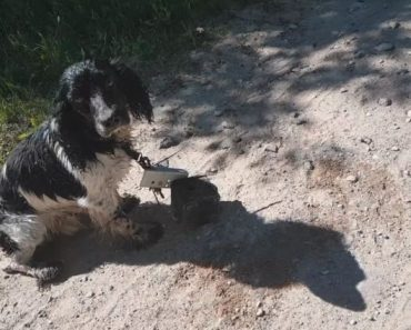 Encontram Cão Molhado Perto De Um Rio e Percebem Que Tem Um Peso Atado Ao Pescoço 3