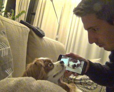 Dono Vinga-se De Cão Ao Acordá-lo Com o Som Do Seu Próprio Ressonar 5