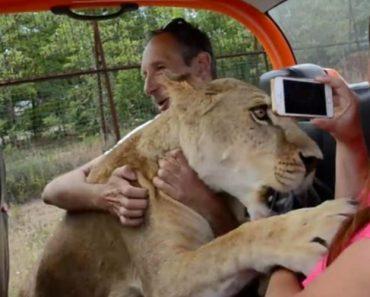 """Leoa """"Abraça"""" Turistas Depois De Ter Sido Resgatada De Zoo Privado 7"""