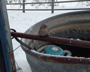 Bondoso Homem Usa a Sua Respiração Para Salvar Pássaro Que Ficou Com As Patas Coladas Em Ferro Congelado 7