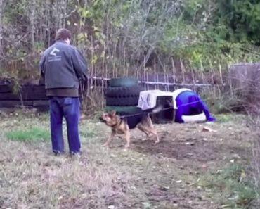 Homem Salva Cão Que Passou Toda a Vida Acorrentado... a Transformação Após 24 Horas é Incrível! 1