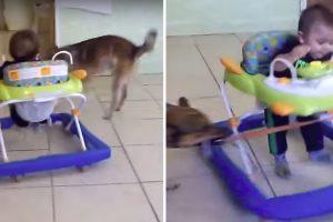 Cão Diverte o Seu Pequeno Dono Com a Sua Versão Caseira De Carrossel 10