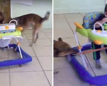 Cão Diverte o Seu Pequeno Dono Com a Sua Versão Caseira De Carrossel 7