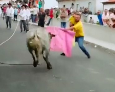 Homem Leva Criança Ao Colo Para Enfrentar Touro Nos Açores 3