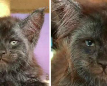 """Gato Conquista Os Internautas Com o Seu Invulgar Olhar """"Humano"""" 9"""