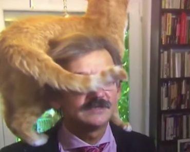 Gato Assume Protagonismo Em Entrevista Em Direto a Cientista Político 7