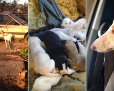 Cadela Ferida Conduz Desconhecidas Durante 3 Km Para Que a Ajudem Com Os Seus 10 Filhotes 18