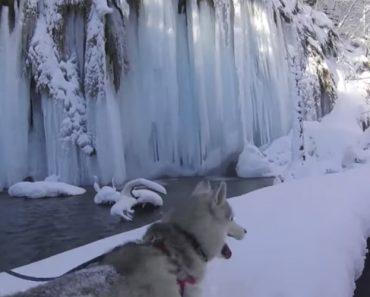 Jovem Filma a Extraordinária Beleza Do Inverno Croata Enquanto Passeia o Seu Husky 3