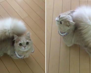 Adorável Gatinha Tem Uma Cauda Tão Felpuda Que Parece Um Esquilo 2