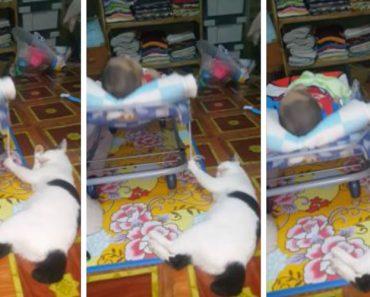 Gato Mostra Como Consegue Facilmente Desempenhar Duas Tarefas Ao Mesmo Tempo 8