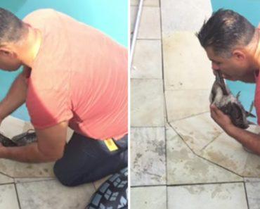 Homem Faz Extraordinário Esforço Para Salvar Ave Que Encontrou Inconsciente Dentro Da Sua Piscina 3