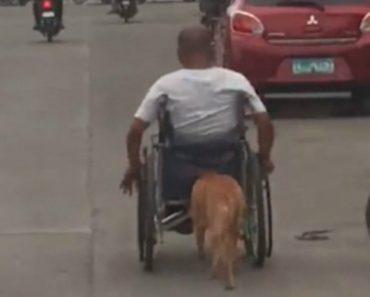 Cão Ajuda Dono a Empurrar Cadeira De Rodas Pela Rua e Comove Internautas 3