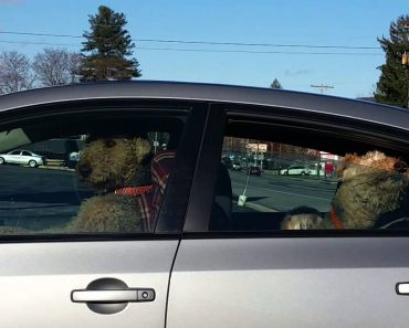 Dono Deixa Cães Trancados No Carro Ao Sol, e Eles Fizeram Isto! 4