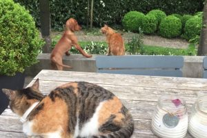 Gato Protege o Seu Amigo Cão Das Garras De Outro Gato 14