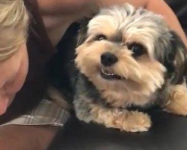 Cão Tem Método Pouco Simpático Para Dar Beijos 5