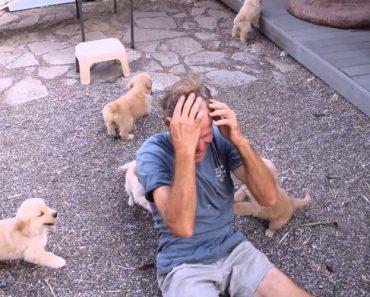 Homem Sofre o Mais Adorável Ataque De Cães Famintos 5