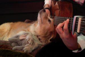 Cadelinha Tem Encantadora Reação Quando o Seu Dono Começa a Tocar Guitarra 24