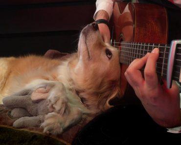 Cadelinha Tem Encantadora Reação Quando o Seu Dono Começa a Tocar Guitarra 6
