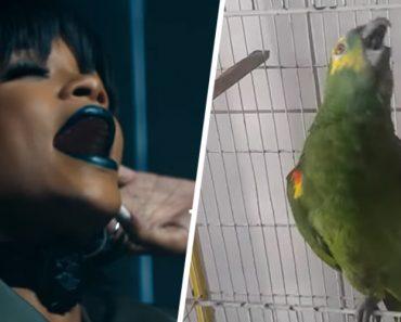 Papagaio Mostra Os Seus Dotes Vocais Ao Cantar Rihanna 7