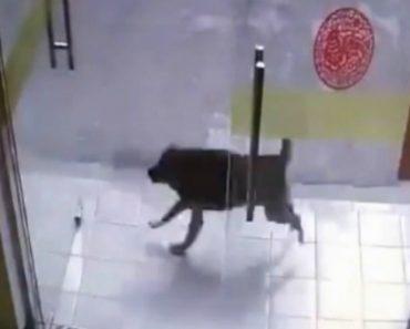 Porta De Vidro Fica Em Cacos Depois De Falhada Perseguição Entre Cão e Gato 3