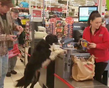 Inteligente Cão Vai a Loja De Animais e Escolhe Os Produtos, Paga e Ainda Carrega As Compras 4