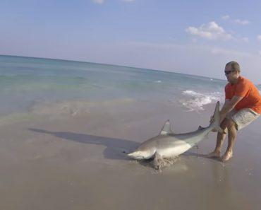 Corajoso Homem Arrasta Tubarão Para Fora Do Mar Para o Libertar De Anzol 1