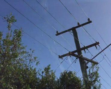 Aranhas Constroem Teia Com Mais De 10 Metros De Comprimento Entre Topo Das Árvores e Cabos Elétricos 1