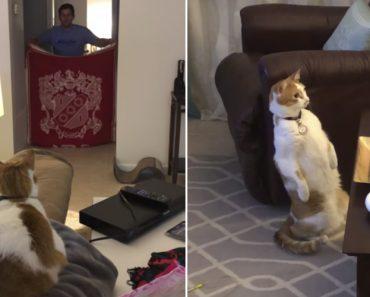 """Gato Fica """"Avariado"""" Ao Ver o Truque De """"Magia"""" Do Seu Dono 8"""