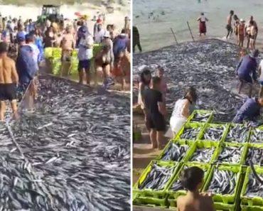 Banhista Filma Inacreditável Quantidade De Peixe Que Pescadores Apanharam Na Praia Da Vieira 6