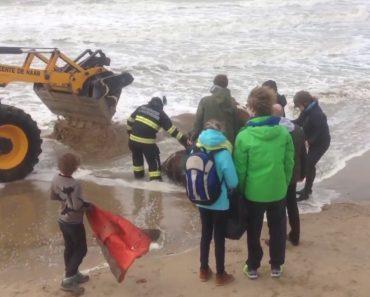 Dramático Salvamento De Um Cavalo Preso Na Areia Quando a Maré Estava a Subir 6
