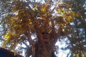 É Extraordinário Como Alguém Conseguiu Criar Um Disfarce De Árvore Humana Com Tanto Realismo 10