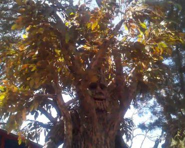 É Extraordinário Como Alguém Conseguiu Criar Um Disfarce De Árvore Humana Com Tanto Realismo 6