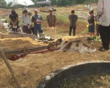 Fiel Cão Persegue Carro Funerário Que Transporta o Corpo Do Dono Por 3 Quilómetros Até Ao Cemitério 7