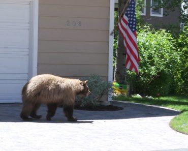 É Difícil Saber Quem Se Assustou Mais, Se o Homem, Se o Urso 7