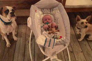 Bebé Dá Incontroláveis Risadas Com As Cócegas Que o Seu Cão Lhe Faz Com o Nariz 10