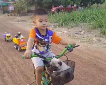Inteligente Menino Cria Transporte Para Poder Passear Os Seus 5 Cães Ao Mesmo Tempo 5