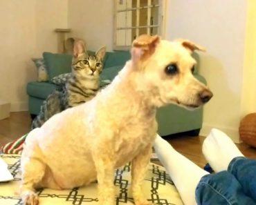 Gato Fica Confuso Ao Ver o Visual Do Seu Amigo Cão Depois De Ser Tosquiado 6